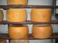 The KING of cheese-Parmigino-Reggiano